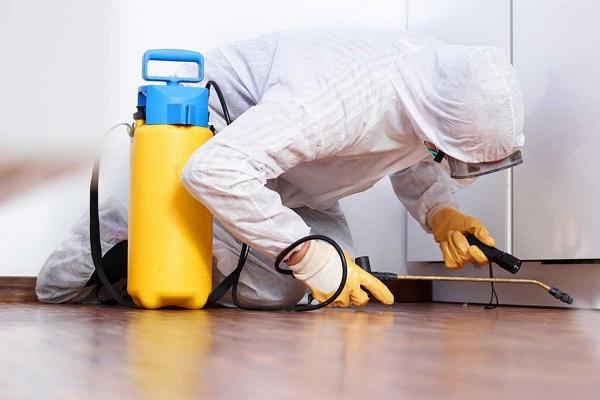 Обработка квартиры химикатами, чего также жутко боятся домашние клопы