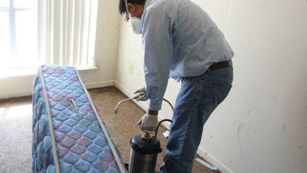 Какое средство от клопов самое эффективное в домашних условиях?